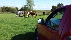 Sunny day on the farm. The horses are enjoying the green pasture.