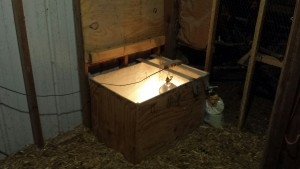Added Brooder Box with light